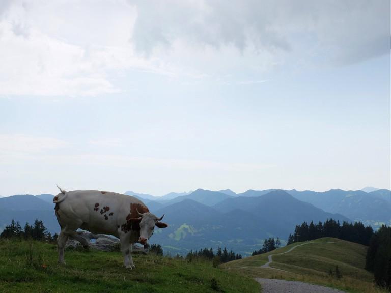 auf dem Blomberg