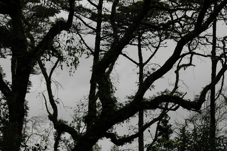 Quinta da Regaleira Park