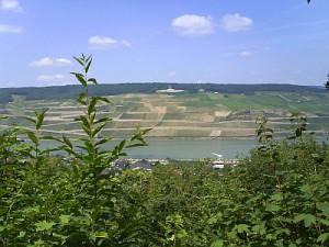 Rhein 25.07.2008