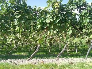 Rochusberg 26.09.2008