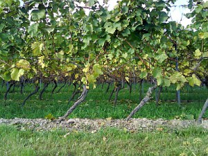 Rochusberg 17.10.2008