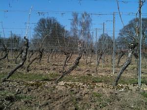 Rochusberg 16.03.2012