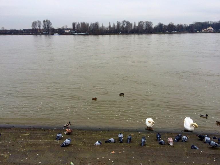 Rhein 13.02.16
