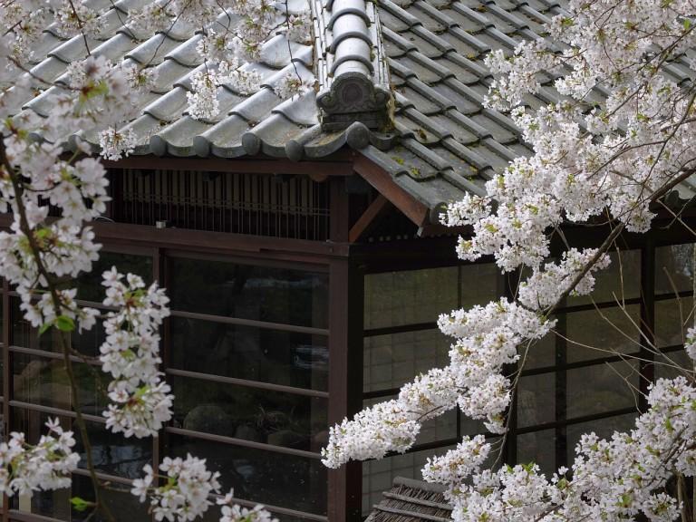 Japanischer Garten KL
