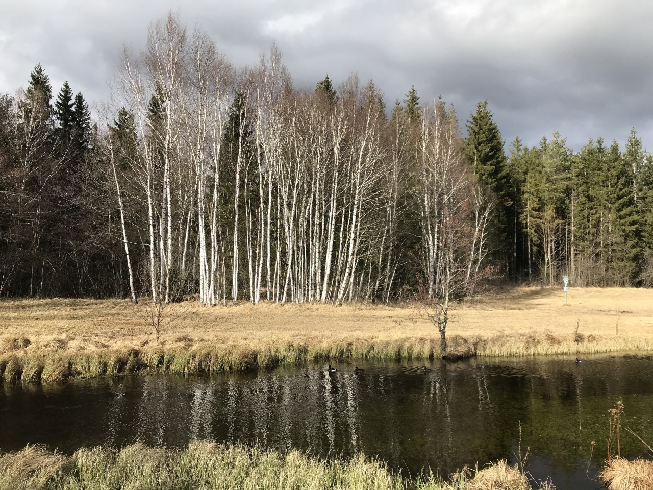 Ellbach-Moor